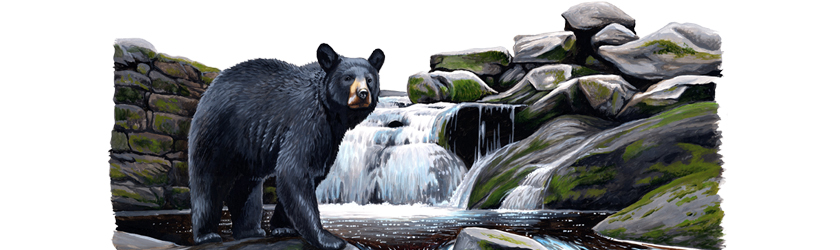 black bear header